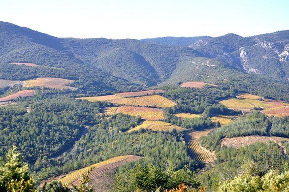 Vue du Domaine Borie de Maurel