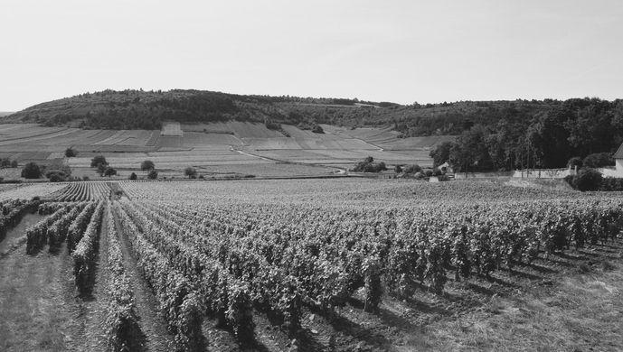 Les vignes du Domaine Francois Raquillet